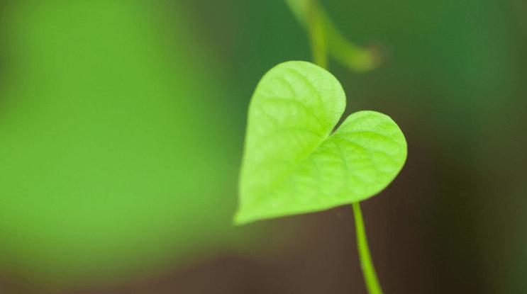 Гимн любви - 13 глава к Коринфянам